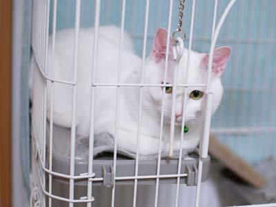 cat1071