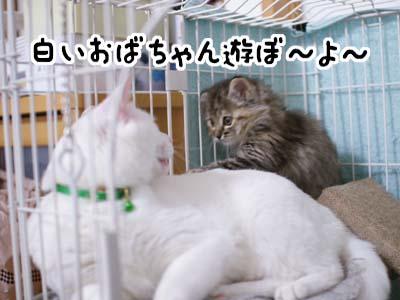 cat1073
