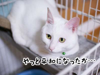 cat1076