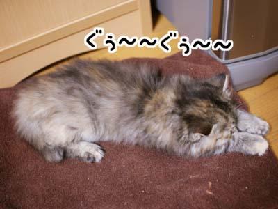 cat1077