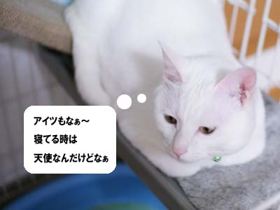 cat1079