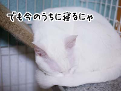 cat1080