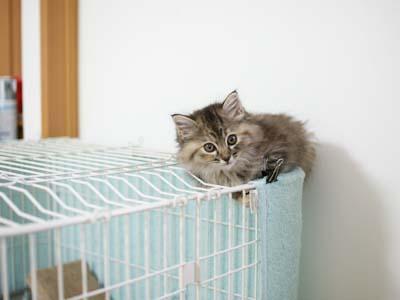 cat1084