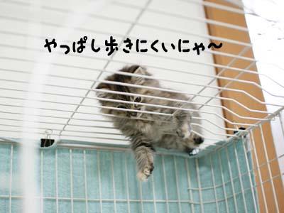 cat1085