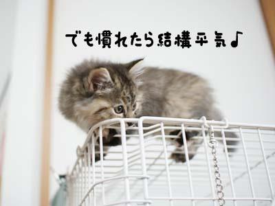 cat1086