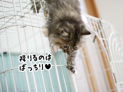 cat1087