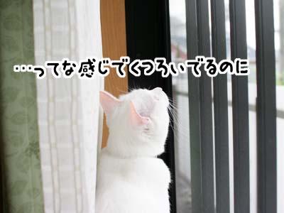 cat1089