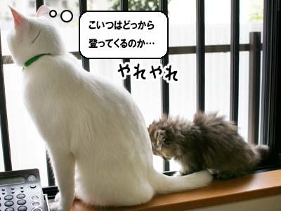 cat1090