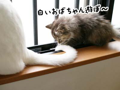 cat1091