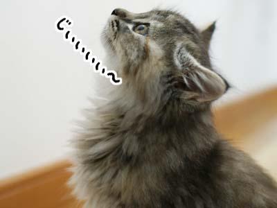 cat1092