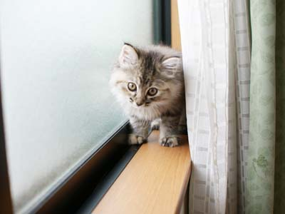cat1093