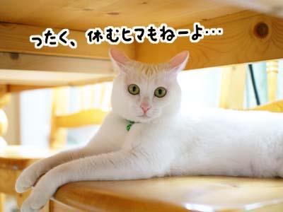 cat1094