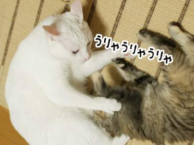 cat1101