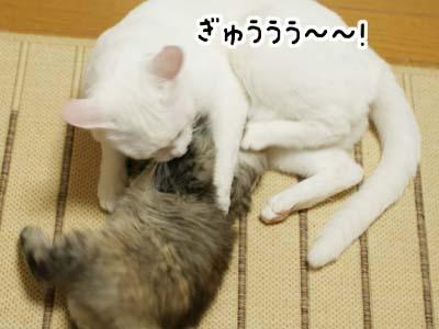 cat1100