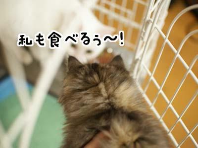 cat1115