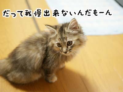 cat1117
