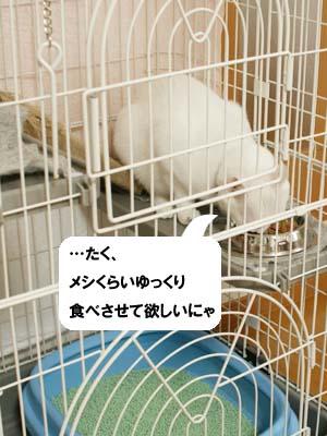 cat1118