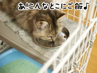 cat1121