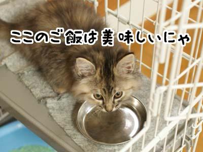 cat1122