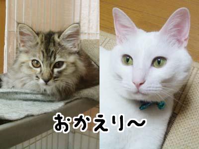 cat1127