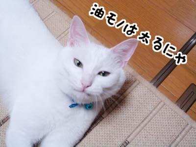 cat1128