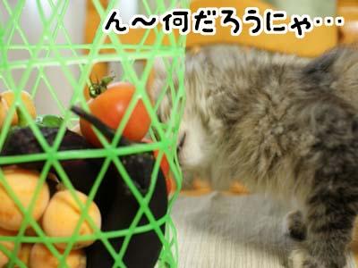cat1131