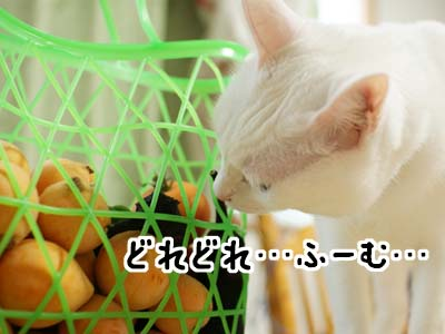 cat1132
