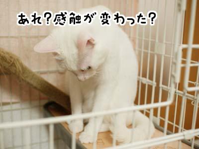 cat1137