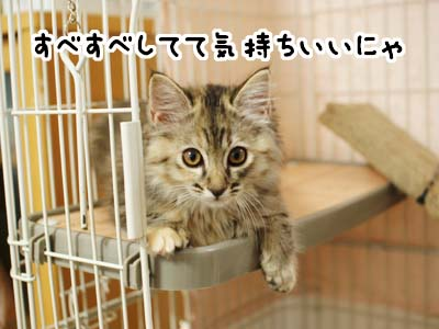 cat1138