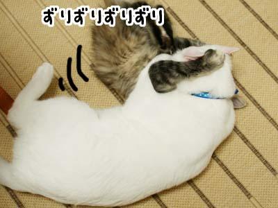 cat1140