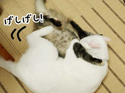 cat1141