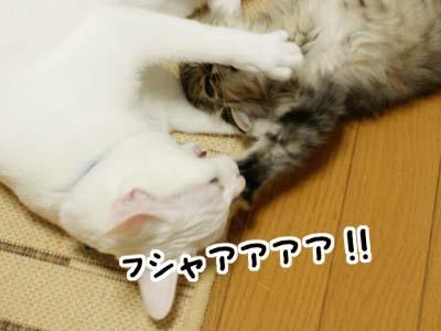 cat1142