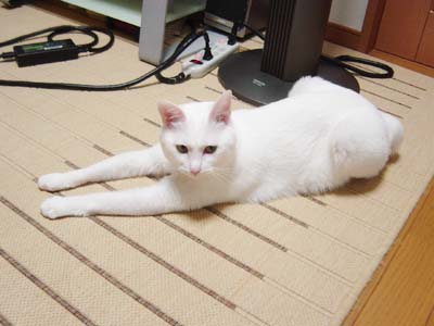 cat1143