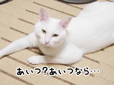 cat1144