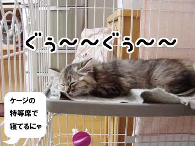 cat1145