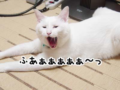 cat1146