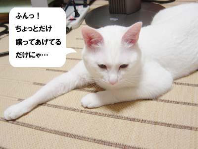 cat1147