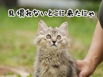 cat1148