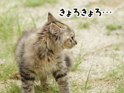 cat1149