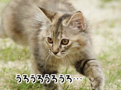cat1150