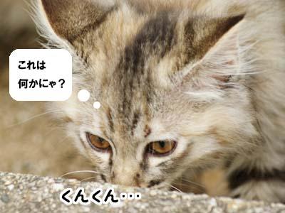 cat1151