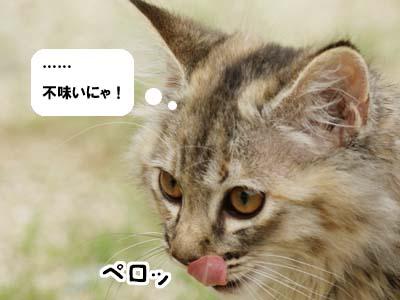 cat1152