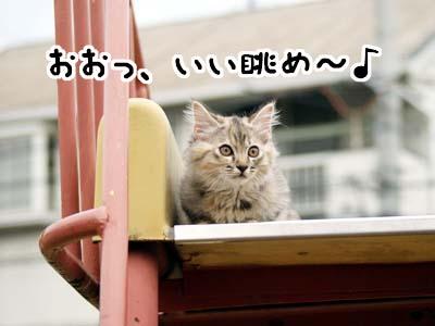cat1153
