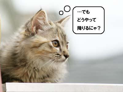 cat1154