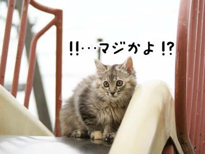 cat1155