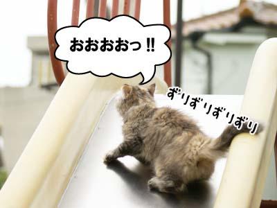 cat1156