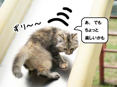 cat1157