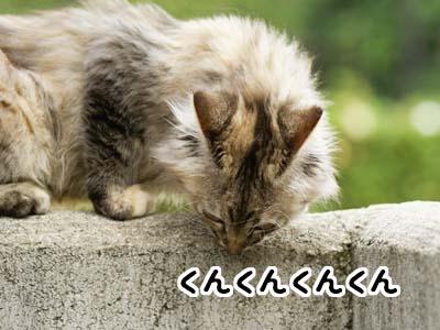 cat1158