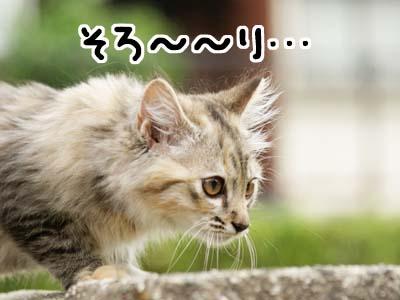 cat1159