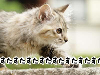 cat1160